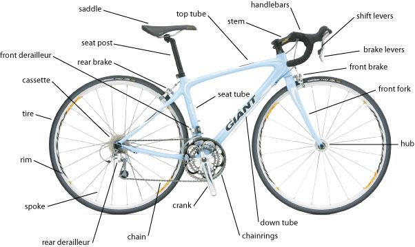 Bike 101 Bicycle Safety Basics Endure Multisport